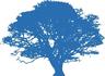 Medium blue oak tree hi