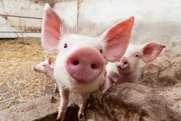 """Why You Don't Put """"Lipstick on a Pig"""" in Real Estate!"""