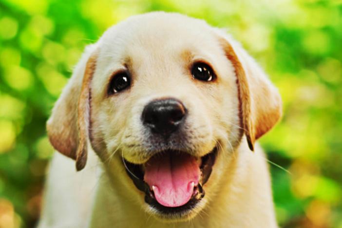 dog-rental