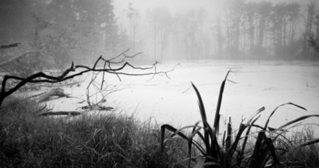 swamp llc asset protection